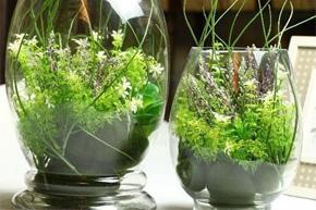 一墙绿意爬上来 花器绿植搭出清新感